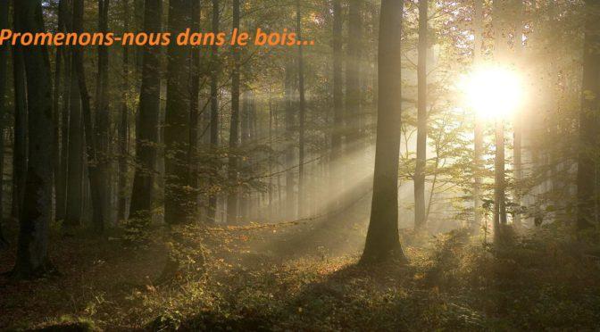 Promenons-nous dans le bois…