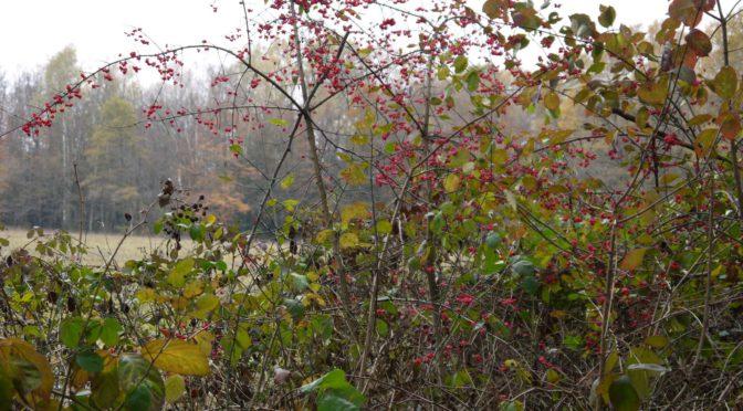 Il y a quelques jours : ma promenade dans le bois…